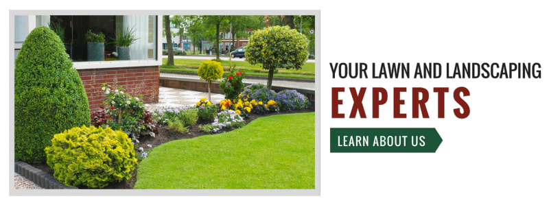 Your Lawn and Landscaping experts